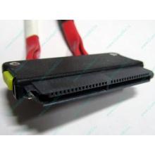 SATA-кабель для корзины HDD HP 451782-001 459190-001 для HP ML310 G5 (Красково)